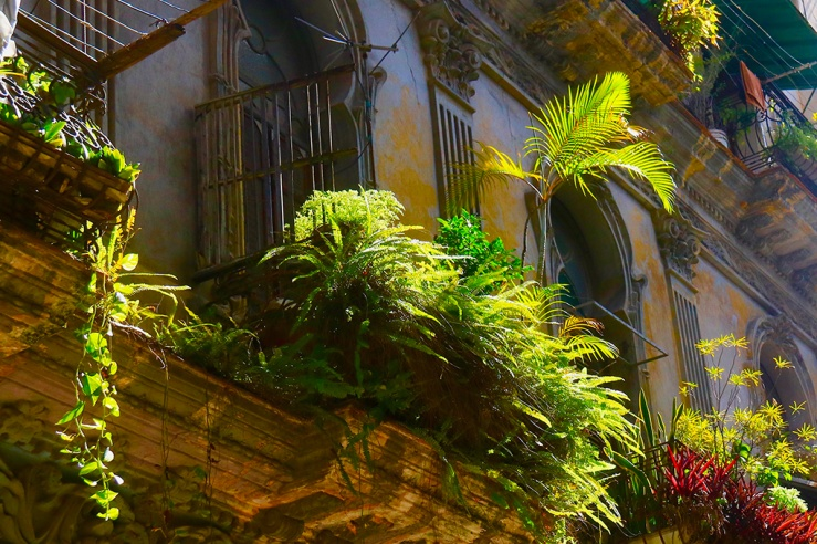 Balcony with farn in Habana, Cuba