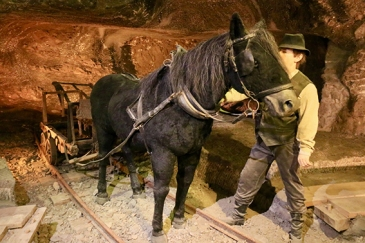 Horses lived in the mine for over ten years http://tinyurl.com/y9odr7ov