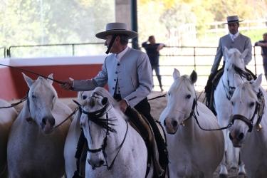 Pferdeschule und -züchter