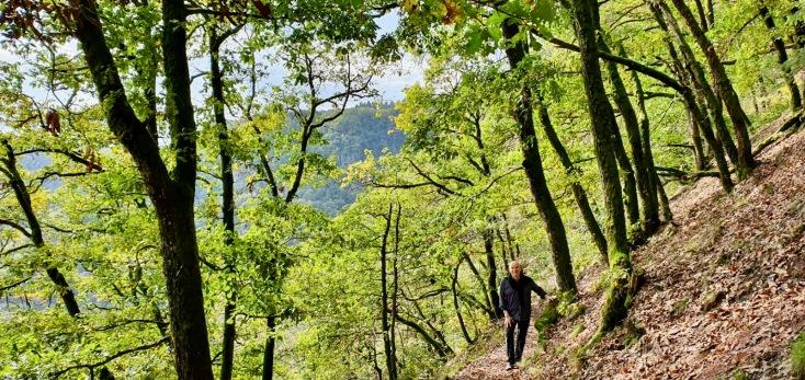 Aufstieg von der Saar zum Baumwipfelpfad